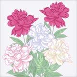 Blumenstrauß mit den weißen und rosa Pfingstrosen lizenzfreie abbildung