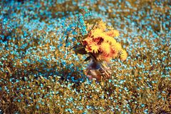 Blumenstrauß mit Vergissmeinnicht und Löwenzahn Lizenzfreie Stockbilder