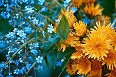 Blumenstrauß mit Vergissmeinnicht und Löwenzahn Lizenzfreie Stockfotos