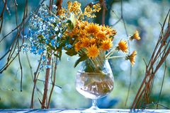 Blumenstrauß mit Vergissmeinnicht und Löwenzahn Lizenzfreies Stockfoto