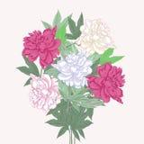Blumenstrauß mit zwei rosa und weißen Pfingstrosen Stockfotografie