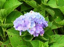 Blumenstrauß-Purpurblumen Stockbild