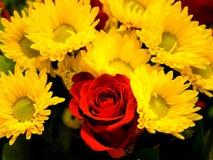 Blumenstrauß Rose und Kamille Lizenzfreie Stockfotografie