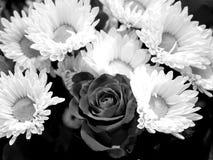 Blumenstrauß Rose und Kamille Stockbilder