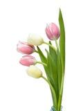 Blumenstrauß-Tulpe Lizenzfreies Stockfoto