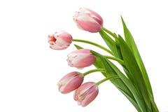 Blumenstrauß-Tulpe Lizenzfreie Stockfotografie