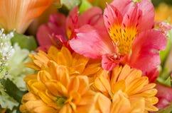 Blumenstrauß von Alstroemeria Stockfotografie