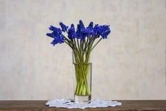 Blumenstrau? von blauen Fr?hlingsblumen Trauben-Hyazinthen stockbild