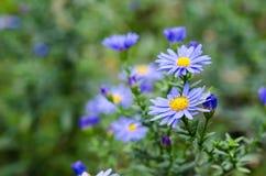 Blumenstrauß von blauen Gartenblumen Stockfoto