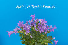 Blumenstrauß von Blumen Stockbilder