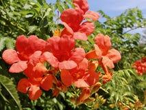 Blumenstrauß von Blumen auf einem Busch Lizenzfreie Stockfotos