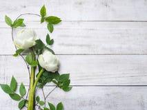 Blumenstrauß von Blumen des weißen Lotos Stockbilder