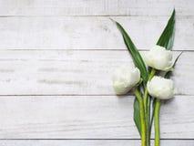 Blumenstrauß von Blumen des weißen Lotos Lizenzfreies Stockfoto