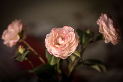 Blumenstrauß von Blumen, rosa Geweberosen auf einem dunklen Hintergrund Stockfotografie