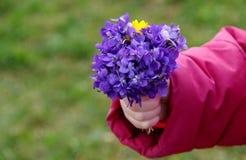 Blumenstrauß von Blumen Violaodorata Lizenzfreie Stockbilder