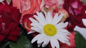 Blumenstrauß von Blumen von den Gänseblümchen und von den Rosen stock footage