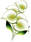 Blumenstrauß von Calla Lizenzfreie Stockfotografie
