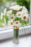 Blumenstrauß von camomiles Lizenzfreie Stockfotos
