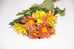 Blumenstrauß von Chrysanthemen Lizenzfreie Stockfotografie