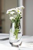 Blumenstrauß von den Gänseblümchen, die im Glasvase auf weißer Tabelle stehen Lizenzfreies Stockbild