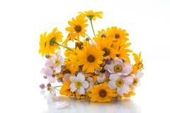 Blumenstrauß von den gelben großen Gänseblümchen lokalisiert auf Weiß Lizenzfreie Stockfotografie