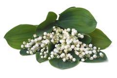 Blumenstrauß von den Maiglöckchen lokalisiert Stockbilder