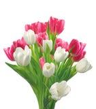 Blumenstrauß von den rosa und weißen Tulpen lokalisiert auf Weiß Stockbild