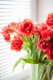 Blumenstrauß von den roten Tulpen Makro Lizenzfreies Stockfoto
