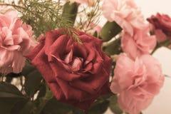 Blumenstrauß von den roten und rosa Rosen lokalisiert auf dem weißen Hintergrund Lizenzfreie Stockfotografie