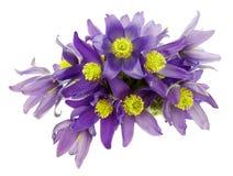 Blumenstrauß von den snowdrops Stockfotografie