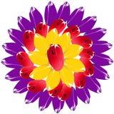 Blumenstrauß von den Tulpenknospen variiert in Form von der Sonnenscheibe Stockbilder