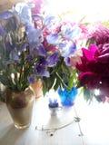 Blumenstrauß von der blauen Iris und von den Rosa- und Burgunder-Pfingstrosen Stockbilder