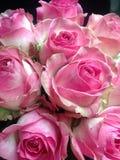 Blumenstrauß von empfindlichen rosa Rosen am Feiertag Stockbild