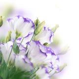 Blumenstrauß von empfindlichen Rosen Stockfotos