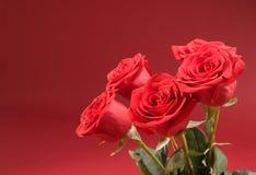 Blumenstrauß von fünf Rosen auf dem roten Hintergrund Stockfoto