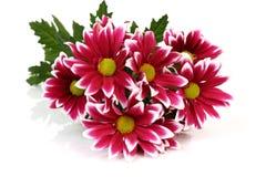 Blumenstrauß von Farben Lizenzfreies Stockfoto