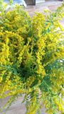 Blumenstrauß von Feldblumen Stockfotos