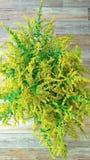 Blumenstrauß von Feldblumen Lizenzfreie Stockfotografie