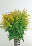 Blumenstrauß von Feldblumen Lizenzfreies Stockbild