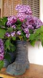 Blumenstrauß von Fliedern in einem Gummistiefel Lizenzfreies Stockfoto