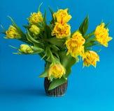 Blumenstrauß von Frühlingsgelbtulpen auf blauem Hintergrund Lizenzfreies Stockbild