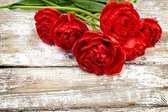 Blumenstrauß von frischen Frühlingstulpenblumen Stockbilder