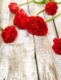 Blumenstrauß von frischen Frühlingstulpenblumen Stockfoto