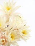 Blumenstrauß von frischen Seerosen Stockbilder