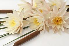 Blumenstrauß von frischen Seerosen und von Cattails Stockfotos