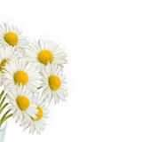 Blumenstrauß von Gänseblümchen Lizenzfreies Stockbild