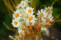 Blumenstrauß von Gänseblümchen Stockfoto