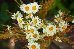 Blumenstrauß von Gänseblümchen auf dem Stumpf Lizenzfreies Stockbild