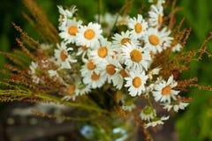 Blumenstrauß von Gänseblümchen auf dem Stumpf Stockbilder