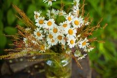 Blumenstrauß von Gänseblümchen auf dem Stumpf Stockfoto